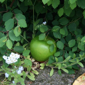 Appel groen cache container