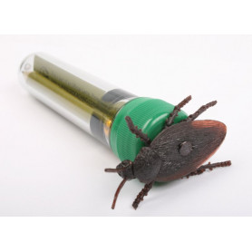 Kakkerlak petlingset