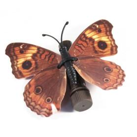 Vlinder cache - 22
